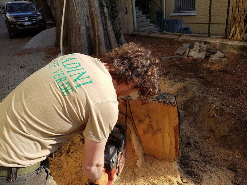 sezionatura tronchi
