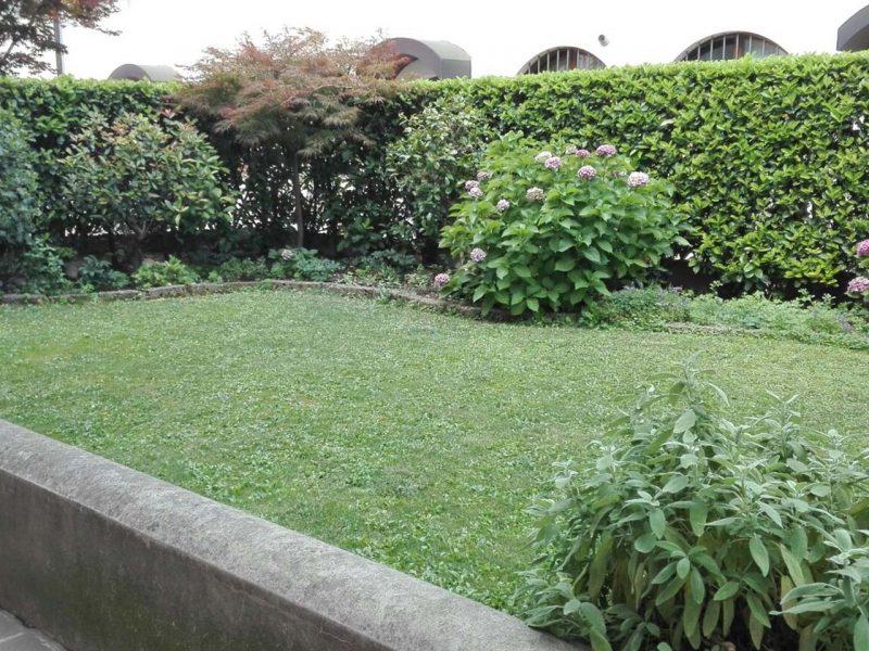 siepe da giardino