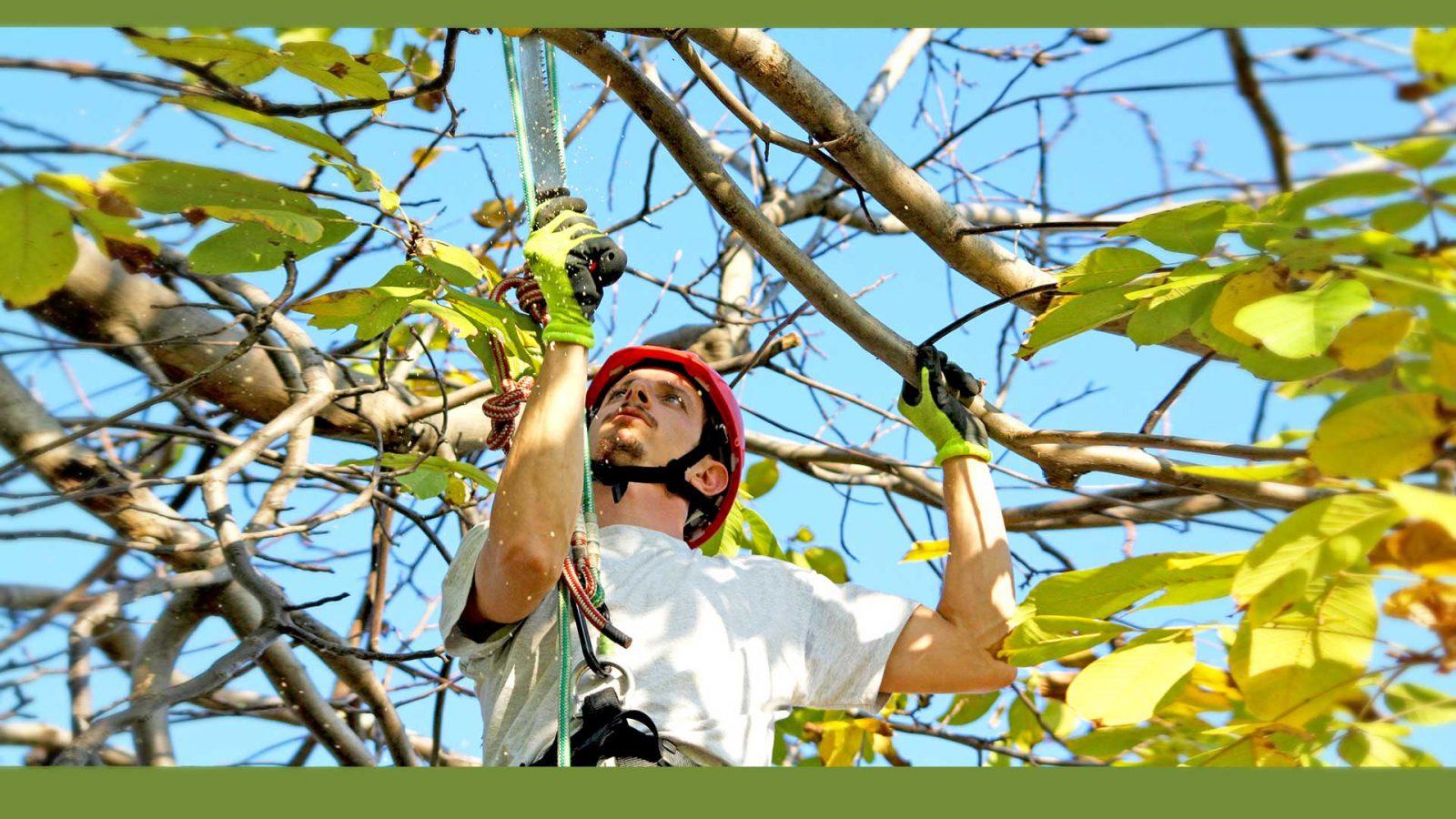 tree climber professionista