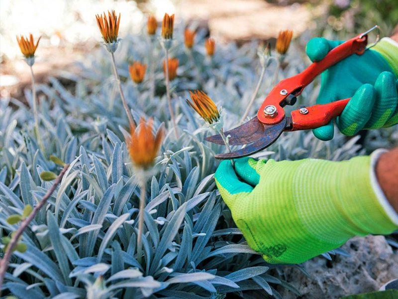 manutenzione fiori