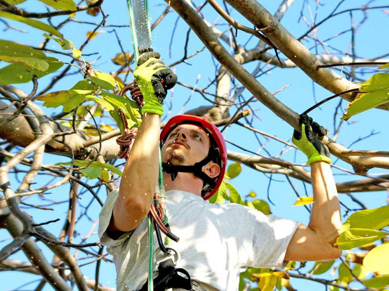 arrampicata sugli alberi